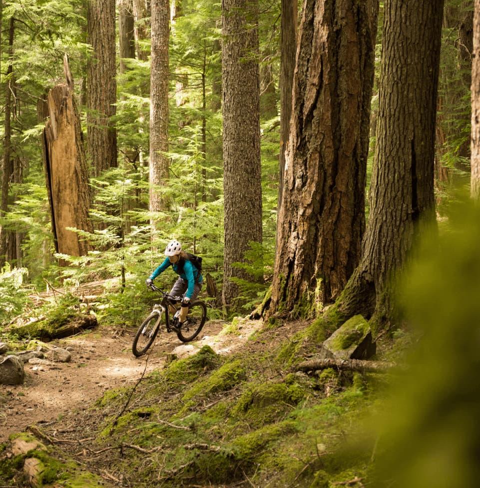 women bicycling through woods